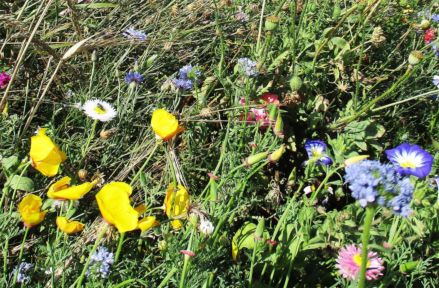 blomster i vejen
